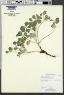 Image of Pediomelum californicum
