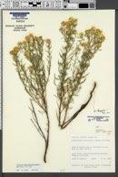 Image of Heterotheca stenophylla